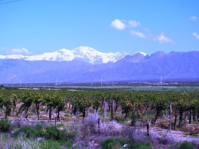 Cerro Colorado i słynne winnice, gdzie produkuje się Malbec, Mendoza, Argentyna,