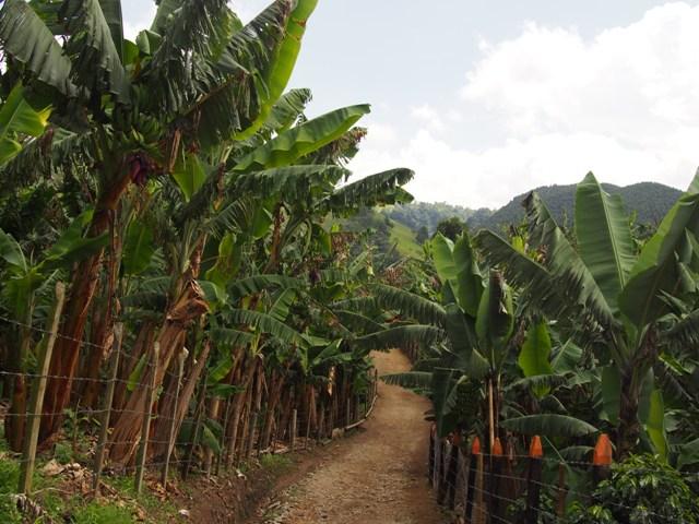 Rodzinna plantacja kawy w Salento, Kolumbia