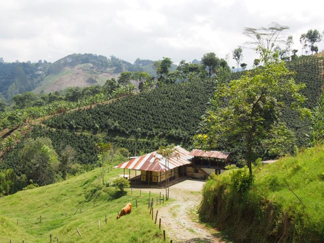 Plantacja kawy, Kolumbia