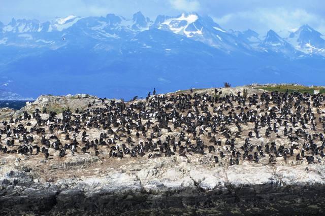 Ushuaia_Kanał Beagle, Ziemia Ognista, Argentyna