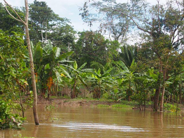 Pucallpa, peruwiańska część Amazonii